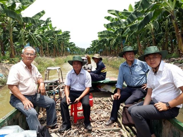 Không chỉ dừng lại ở việc tích tựu ruộng đất trồng lúa, ông Sáu Đức còn mạnh dạn chuyển đổi cây trồng khi dành 55ha đất trồng chuối Nam Mỹ xuất khẩu