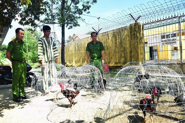 Bắt 54 đối tượng sát phạt tại sới gà trên khu đất vắng - 1