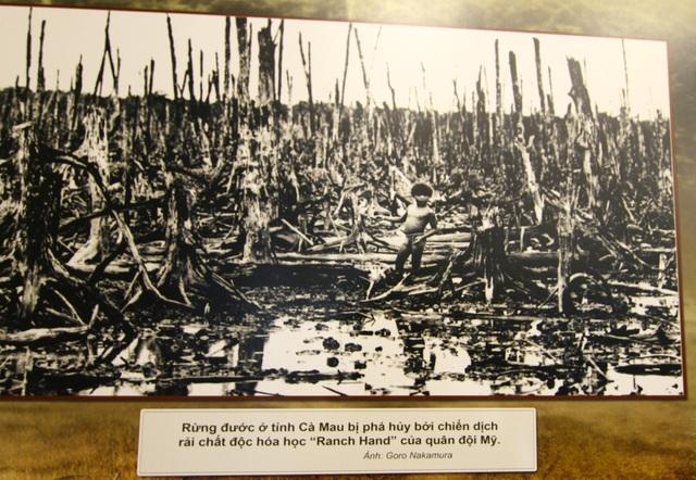 Trong cuộc chiến tranh sử dụng chất độc hóa học kéo dài, hàng triệu ha rừng đầu nguồn tại Việt Nam đã bị tàn phá. Đông Nam Bộ là vùng bị ảnh hưởng nặng nề nhất với 56% diện tích tự nhiên bị phun rải. Diện tích rừng ngập mặn bị ảnh hưởng chất độc hóa học là 150.000 hecta, điển hình là khu rừng ngập mặn ở Cà Mau