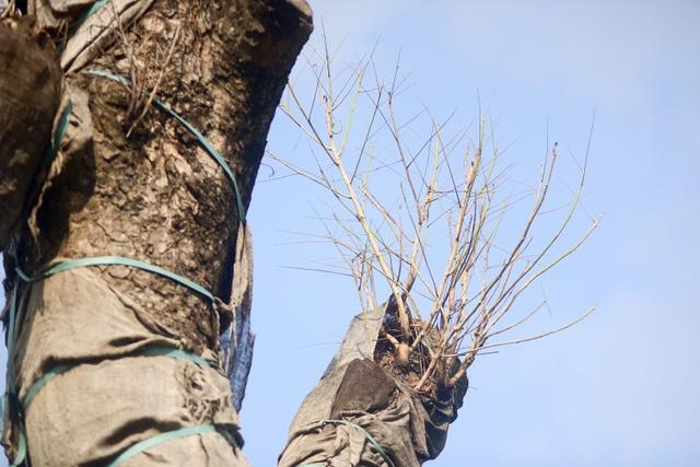 Những nhánh cây đã khô héo.