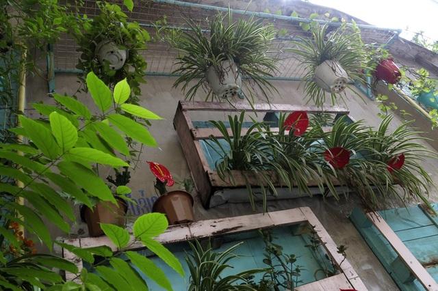 Những vườn treo nhỏ xinh, mát mắt dọc ngõ phố Hà Nội - 15