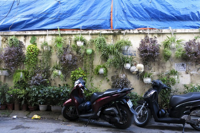 Còn đây là ngõ 3 phố Thái Hà (quận Đống Đa), một vườn treo với hàng chục chậu cây nhiều màu sắc được người dân tạo ra.