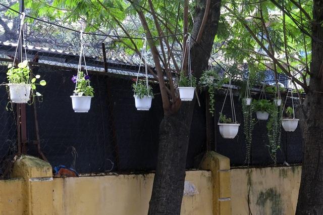 Các chậu hoa treo cả lên cây trong ngõ 250 Khương Trung.
