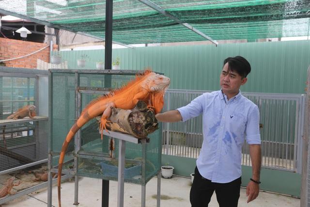 Choáng ngợp giữa hàng trăm con rồng Nam Mỹ được nuôi tại Sài Gòn