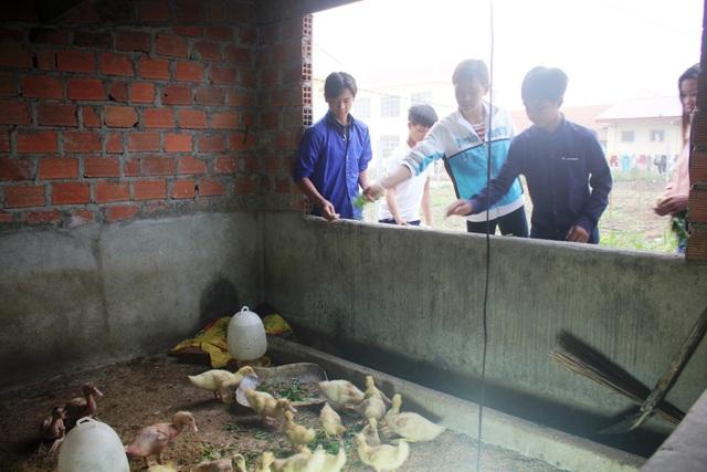 Các em chăm sóc heo, vịt nhằm cải thiện bữa ăn, Tết đến được mang về cho gia đình ăn Tết.
