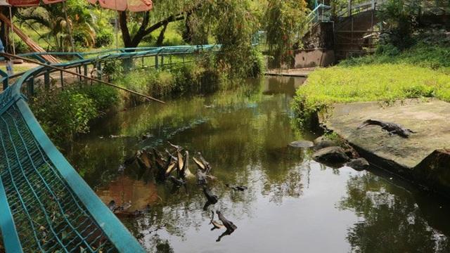 Hoạt động giải trí tại đồi Tức Dụp - cho cá sấu ăn