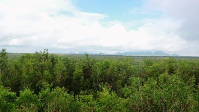 Toàn cảnh rừng tràm từ tầm nhìn trên đỉnh đài quan sát