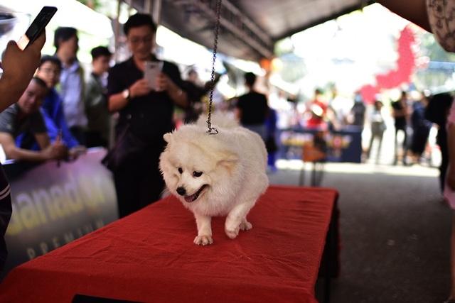Lễ hội là nơi những người yêu thú cưng có dịp giao lưu, học hỏi kinh nghiệm cũng như là cho các bé thi thố tài năng