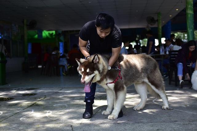 Lễ hội cún cưng Sài Gòn 2018, sự kiện dành riêng cho những người yêu động vật trên địa bàn TP HCM, diễn ra trong 2 ngày 27 và 28-10 tại Công viên Văn hóa Đầm Sen với nhiều hoạt động mới lạ, độc đáo.