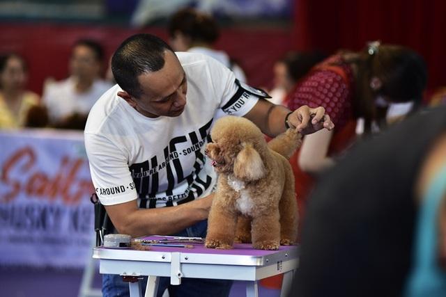 Cuộc thi chăm sóc cún cưng cũng khá hấp dẫn và căng thẳng