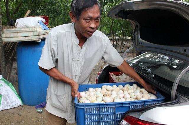 Mỗi ngày thương lái thường đánh ô tô đến lấy trứng xuất sang Lào
