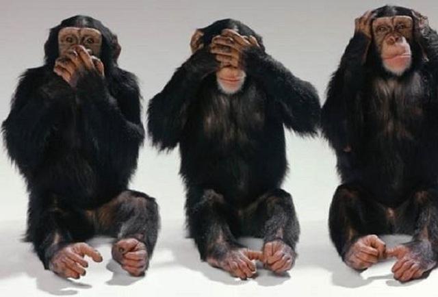 Tinh tinh không có lông trên mặt và trên lòng bàn tay, bàn chân. Giống các loài khỉ, vượn khác, tinh tinh không có đuôi.