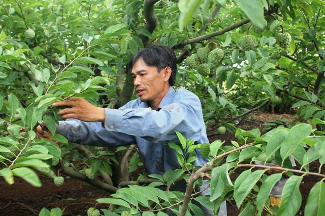 Với việc chuyển đổi mô hình cây trồng đã giúp cho gia đình anh Ất và các hộ khác thoát nghèo trên vùng đất cằn