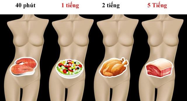 Mất bao lâu để tiêu hóa hết thực phẩm nạp vào cơ thể? - 1
