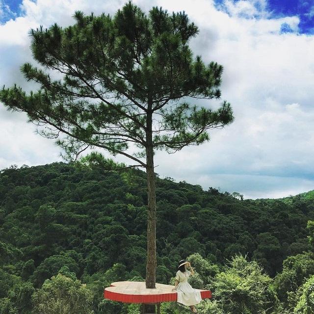Cây thông độc đáo này tọa lạc tại khu du lịch Hoa Sơn Điền Trang, nằm ngay đèo Tà Nung, Lâm Đồng (Quốc lộ 725), tuyến đèo nối liền thị trấn Nam Ban và Thành phố Đà Lạt. Ảnh: @nmn.ngocn