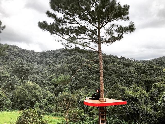 """Khác với """"cây thông cô đơn"""" nổi tiếng ở đồi sứ Thiên Phúc, Hồ suối Vàng (Đà Lạt), cây thông trái tim có các bậc thang để bạn trèo lên check-in. Ảnh: @lethy"""