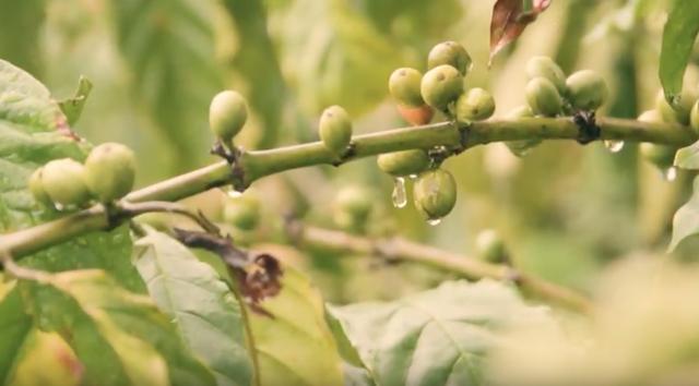 Giờ đây, Việt Nam trở thành một trong 2 quốc gia có sản lượng cà phê xuất khẩu lớn nhất thế giới. Ý tưởng xây dựng tour du lịch cà phê cũng được cộng đồng làm du lịch mở ra.