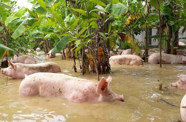 Nhằm khắc phục thiệt hại về sản xuất nông nghiệp, tỉnh Thanh Hóa cũng đã có quy định chi tiết mức hỗ trợ.