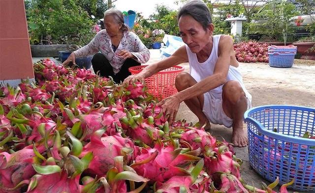 Trung Quốc quyết định đột ngột, vạn nông dân Việt khóc ròng - 3