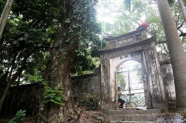 Cây sưa trăm tỷ chùa làng Phụ Chính, xã Hòa Chính, huyện Chương Mỹ (Hà Nội).