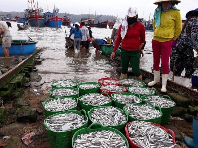 Những luồng cá cơm dày đặc mang lại niềm vui cho ngư dân Quảng Ngãi trước mùa biển động.