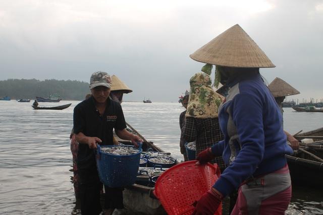 Lộc cá cơm còn mang lại thu nhập cho nhiều lao động trên bờ.