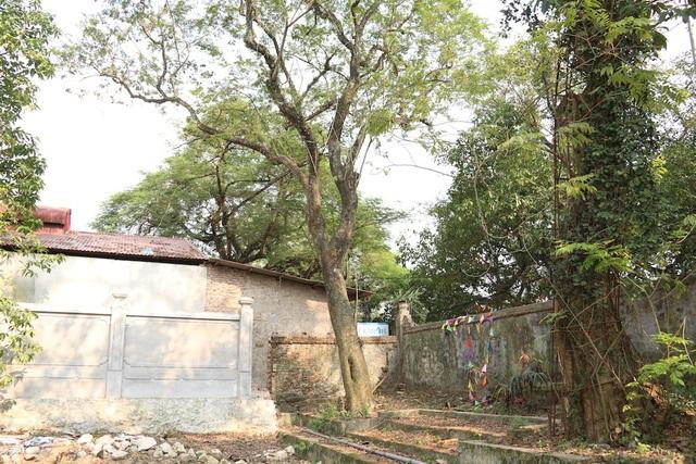 Cây sưa đỏ quý nằm trong khuôn viên chùa làng của thôn Phụ Chính (xã Hòa Chính, huyện Chương Mỹ, Hà Nội). Cây được xác định có tuổi đời vào khoảng 130 năm, cao 8m với đường kính 1m. Xung quanh chuyện mua bán cây sưa này đến nay vẫn tồn tại những câu chuyện ly kỳ.
