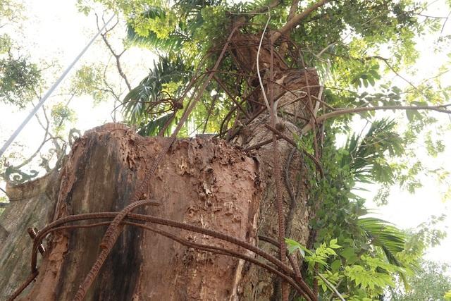 Đến năm 2015, số gỗ sưa bị tạm giữ được bán đấu giá thu về số tiền hơn 31 tỷ đồng. Vụ bán đấu giá này gây xôn xao mất một thời gian dài.