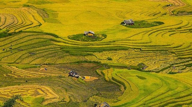 Y Tý mùa vàng - thắng cảnh ngoạn mục đất trời Tây Bắc mỗi độ Thu sang - 15