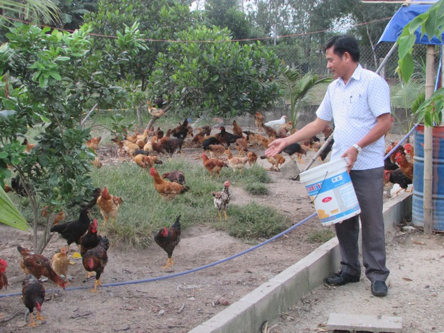 Ông Mười cho gà ăn
