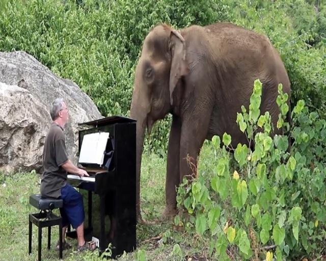 """Paul Barton – nghệ sĩ dương cầm người Anh nổi tiếng với tiếng đàn có thể """"vuốt ve"""" được voi."""