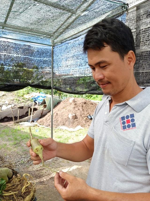 Một cây sứ đã được anh Phong cắt hết rễ phụ, chỉ chừa lại một rễ chính để giâm xuống đất
