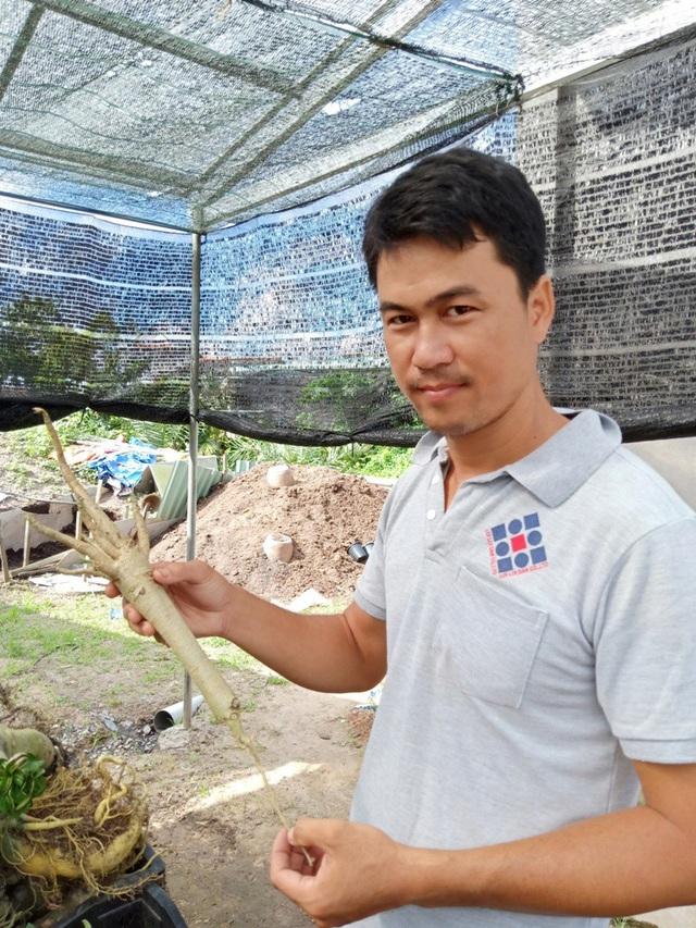 Khi rễ chính phát triển to bằng thân, tiếp tục cắt hết rễ phụ, chừa lại rễ chính rồi giâm xuống đất phần đuôi rễ, từ 10 -20cm