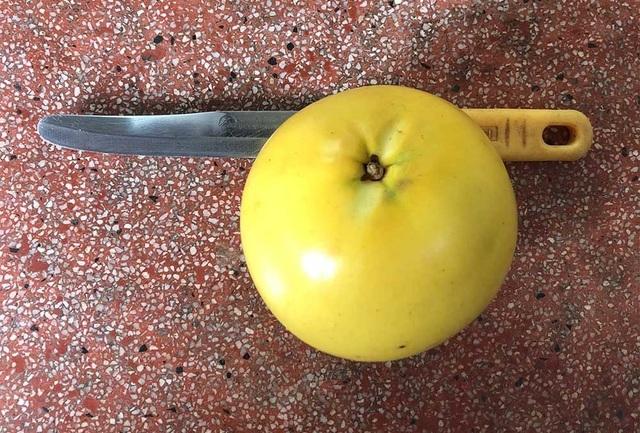 Vú sữa vàng mỗi trái nặng khoảng nửa kg