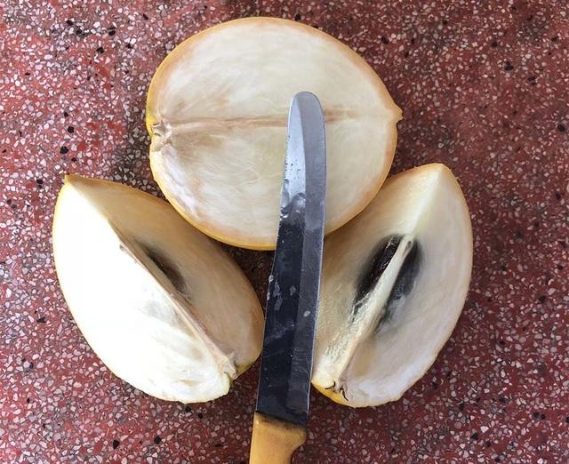 Vỏ vú sữa vàng rất mỏng, bên trong chỉ có một hạt nhỏ, thịt quả dày có vị ngọt thanh, ăn không dính nhựa