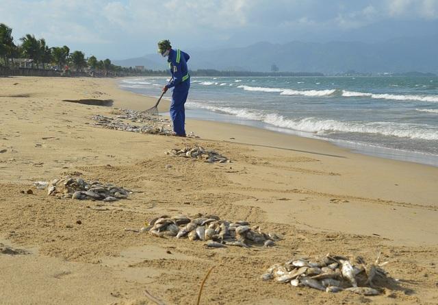 Công nhân thu gom cá chết