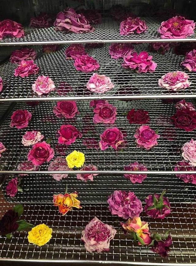 Sấy xong, trà hoa hồng gần như giữ nguyên được màu sắc ban đầu
