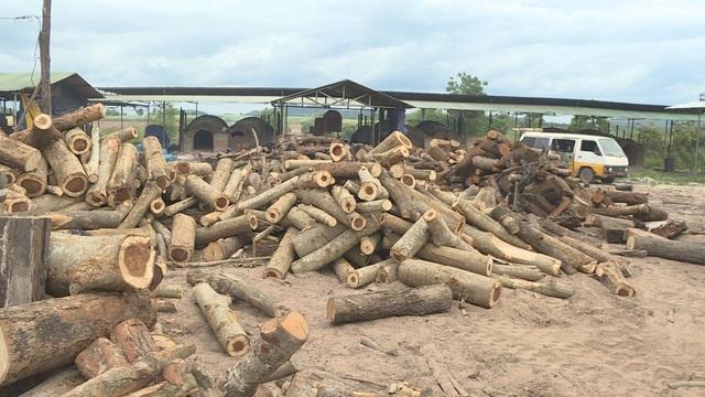 Số gỗ này được xác định cắt từ rừng tự nhiên nhưng không có hóa đơn. chứng từ