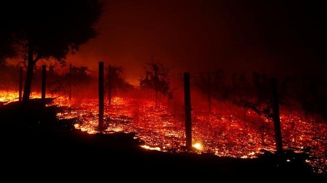 Cháy rừng gần như thiêu rụi những khu vực ngọn lửa lan tới (Ảnh: Reuters)