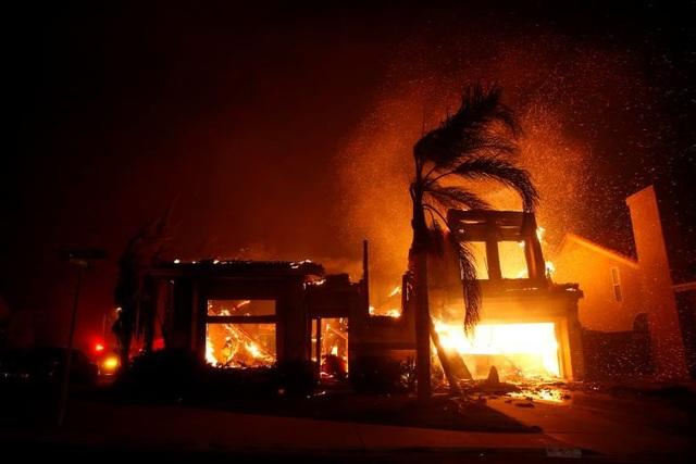 """Thoát chết khỏi """"biển lửa"""" cháy rừng ở California nhờ chạy theo cáo - 10"""