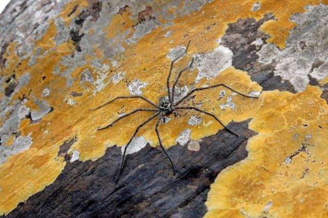 Điểm danh những loài nhện độc nhất thế giới có khả năng gây chết người - 2