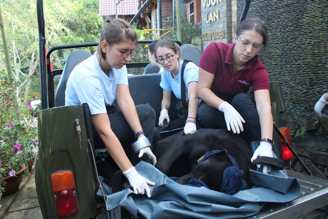 Các nhân viên của Trung tâm Bảo tồn động vật hoang dã đưa cá thể gấu chó về có sở bảo tồn gấu Ninh Bình