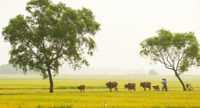 Bình dị làng quê Huế