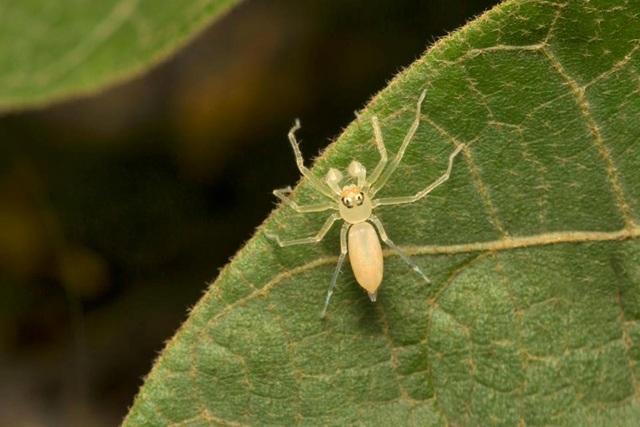 Điểm danh những loài nhện độc nhất thế giới có khả năng gây chết người - 1