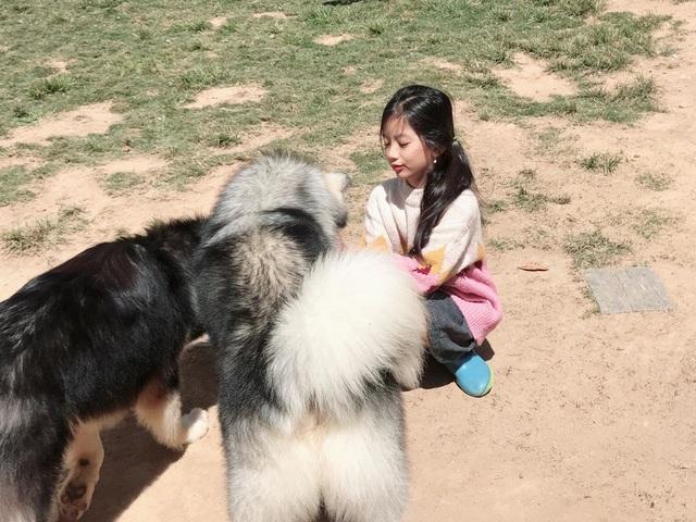 Thậm chí, Chiko còn mong muốn được tự mình chuẩn bị thức ăn cho những chú cún.