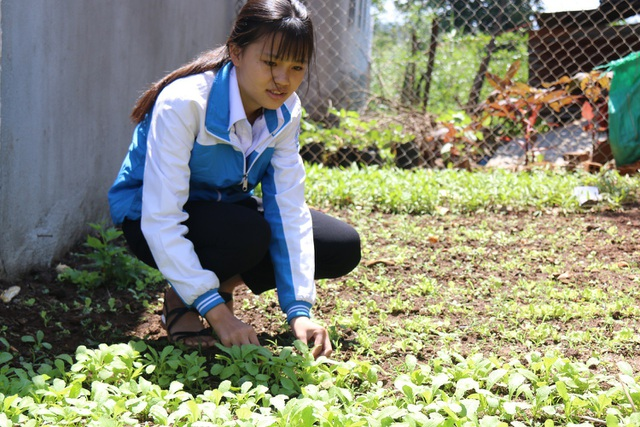 Vườn ra xanh được trồng sắp đến ngày thu hoạch
