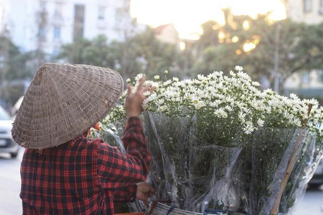 Ngắm cúc họa mi tinh khôi mang đông về khắp phố phường Hà Nội - 12
