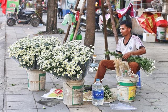 Hiện tại, cúc họa mi được bán nhiều trên các tuyến phố: Nguyễn Chí Thanh; Nguyễn Trãi (Hà Đông); đường Phan Đình Phùng;…
