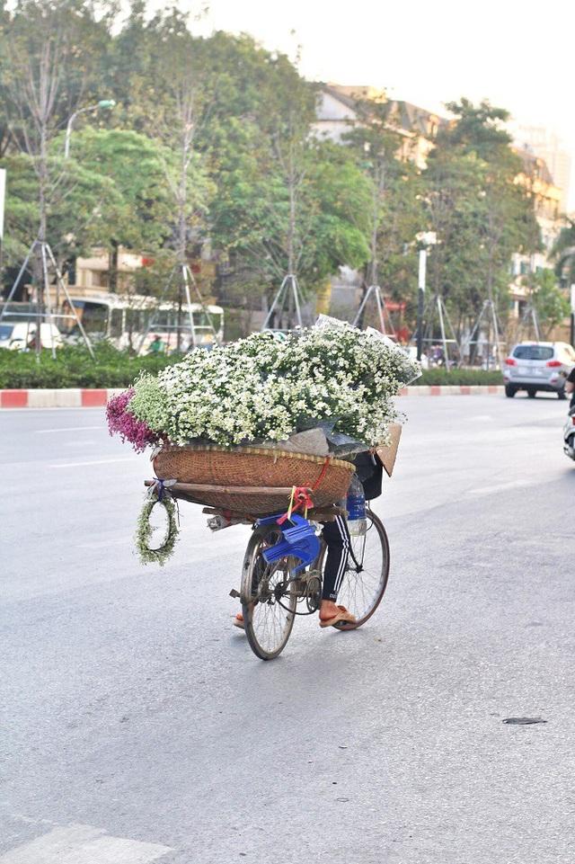 Thời điểm hiện tại, cúc họa mi đã vào chính vụ và bung nở những cánh hoa đẹp nhất. Những gánh hàng rong trở thành tâm điểm giữa phố phường đông đúc