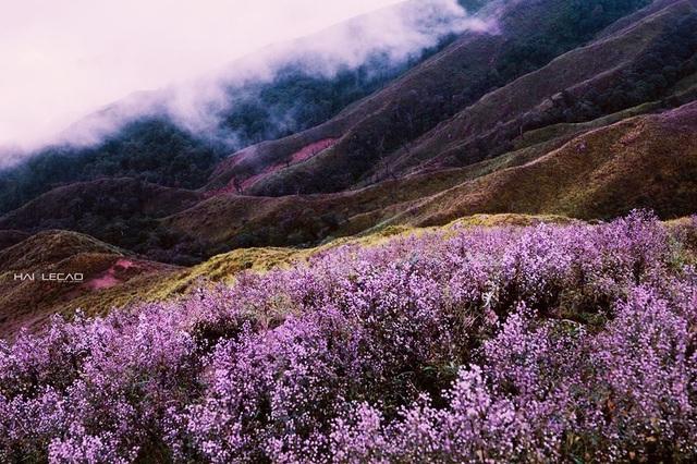 So với đỉnh Fansipan thì Tà Chì Nhù thấp hơn nhưng đường lên đỉnh cao Yên Bái này khó khăn hơn gấp bội. Con đường mòn dẫn lên đến đỉnh gần như độc đạo, dựng đứng, đôi lúc như đi trên sống núi. Ảnh Hai Le Cao